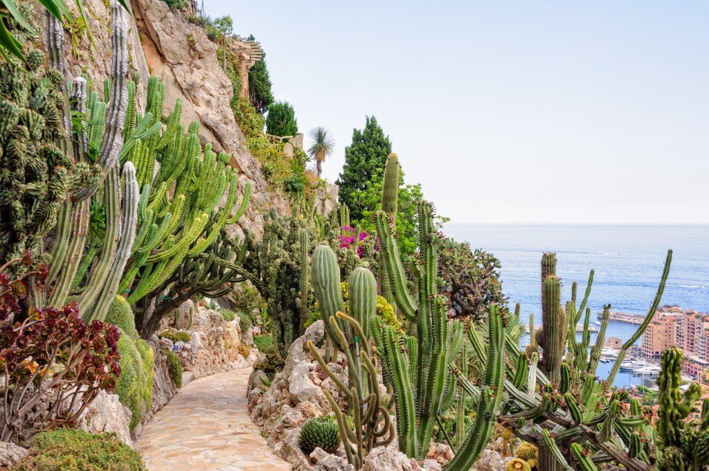 Le Jardin Exotique de Monaco réouvrira à l'été 2022